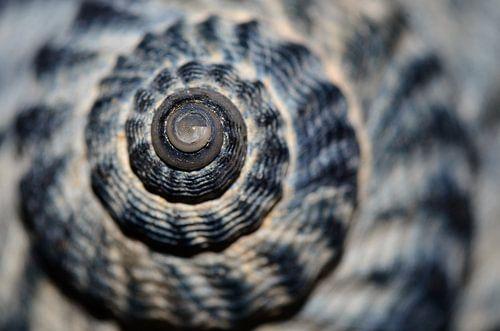 Macro van een schelp von Marcel Pietersen