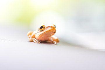 Frosch mit Blur von Marcel Derweduwen