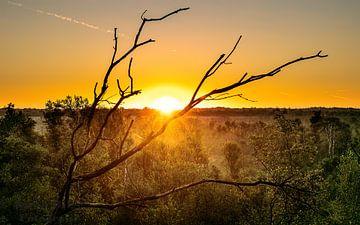 Sonnenaufgang über dem Vragenderveen von Jarno Hilge