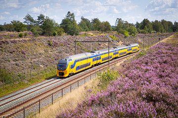 Een dubbeldekker trein langs de heide bij Halte Assel van
