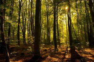Zomermiddag in het Kralingse Bos