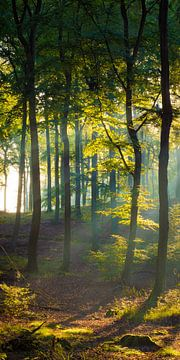 Défrichement de la forêt
