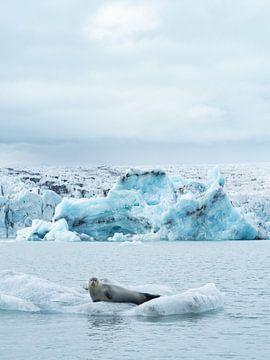 Zeehond op een ijsschots in Jokulsarlon gletsjermeer, IJsland van Teun Janssen