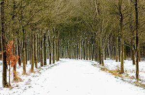 Close to you - Bospad in de sneeuw van