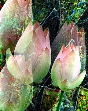 Florale Spielerei A Lotus Blühte  van Gertrud Scheffler