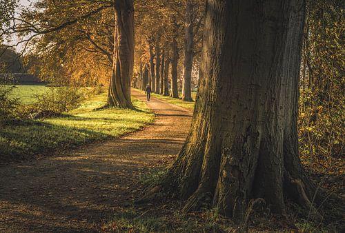 Laan met de verwrongen boom van Joris Pannemans
