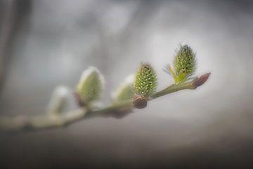 Lente.  van Paul Roelofs Fotografie