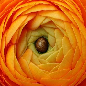 Oranje boven van Marco Weening