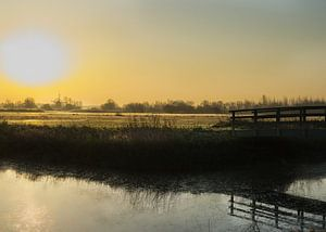 weiland in de eerste zonnestralen van Bart Nikkels
