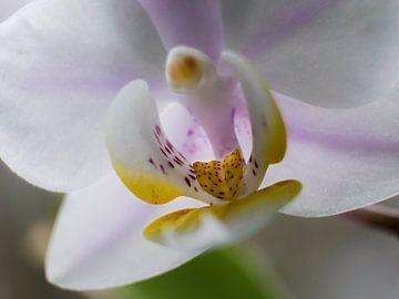 Orchidee von Helga fotosvanhelga