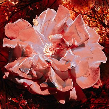 Saisonale Rose in einem warmen, herbstlichen Wald. von Helga Blanke