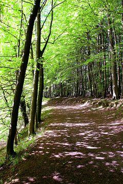 bos van Ostsee Bilder