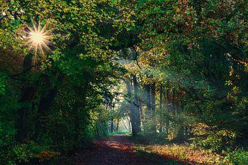 zonnestralen von Peter Heins