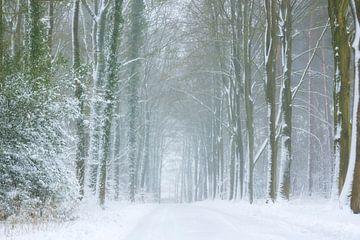 Boslandschap in de sneeuw van Francis Dost