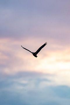 Ibis van Vincent Vink