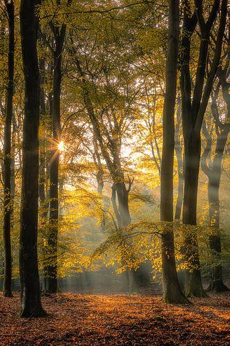 Silence of the forest van Costas Ganasos