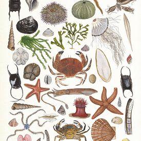 Sealife 2 (leven in zee 2) van Jasper de Ruiter