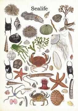 Sealife 2 (Meereslebewesen 2) von Jasper de Ruiter
