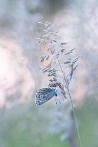 Vlinder in dromenland.