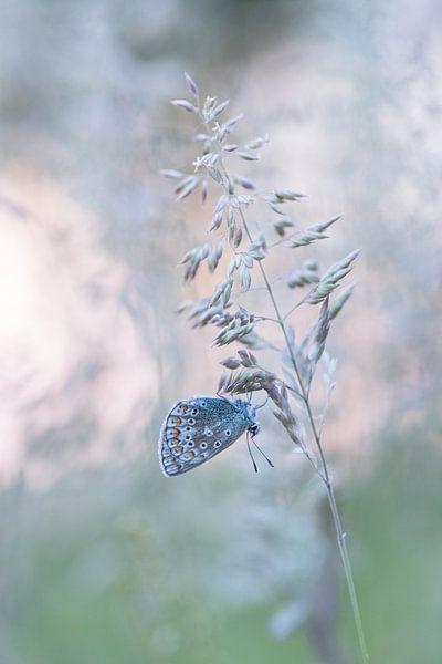 Vlinder in dromenland. van Francis Dost