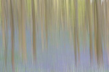 Bos in beweging van