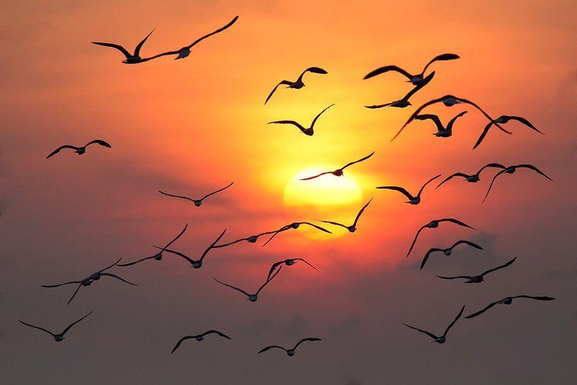 Zeemeeuwen tijdens zonsondergang van Dick van Duijn
