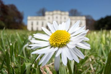 bloempje von Paul Glastra Photography
