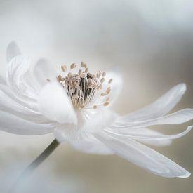 White beauty van Christl Deckx