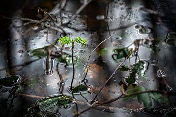 Natuurbeeld : groei in de natuur van Chihong