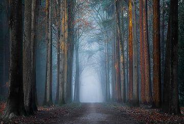 Straße ohne Ende von Jos Erkamp