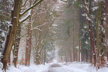 Magische sfeer in het bos van Francis Dost