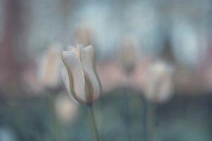 bloemen part 124 van Tania Perneel