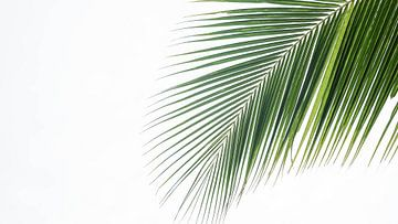 Uiteinde van een palmblad in de Filipijnen van Jessica Lokker