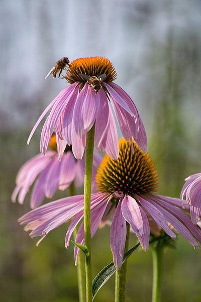 Bijenbezoek sur Anneke Hooijer
