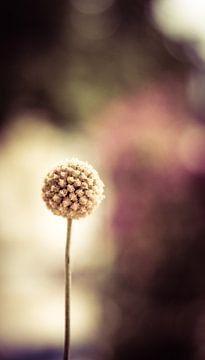 bolvormige bloem von Syl via