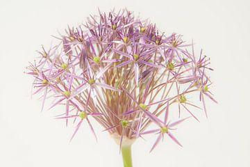 Blumenkunst von Hilda van den Burgt