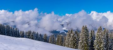 winter forest van