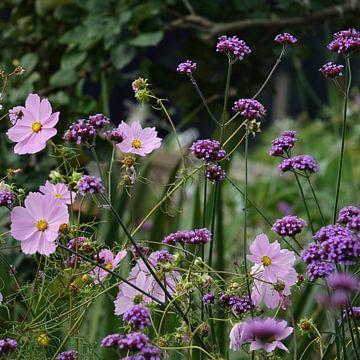 Paarse en roze bloemen van Daan Hartog