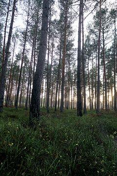 Wald#2 von Mike Ahrens