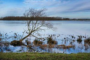Pignon près de l'Oeverlanden Strijen Sas sur Leontine van der Stouw