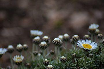 Bloemenveld van Winfred van den Bor
