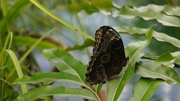 vlinder met verstopte schoonheid van Lieke Elsinga