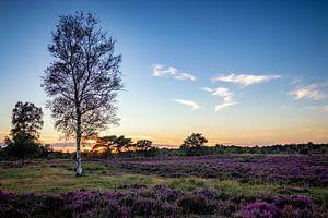 That tree van Johan Mooibroek