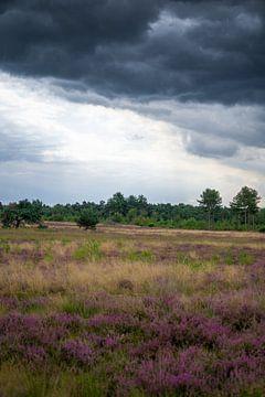Donkere Lucht over de heide van Fotografie Marco Houben