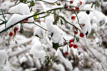 Tak met bessen in de sneeuw