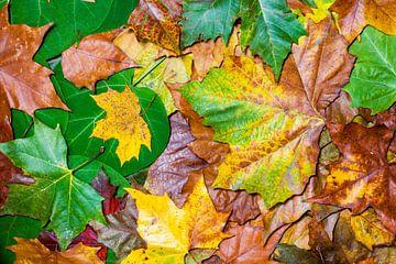 herfst bladeren van Marcel Derweduwen