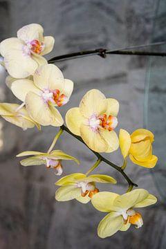 Orchideeën feest. van Michael Klinkhamer