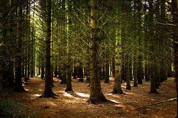 Mooie zonneharpen in het bos van Marloes Hoekema