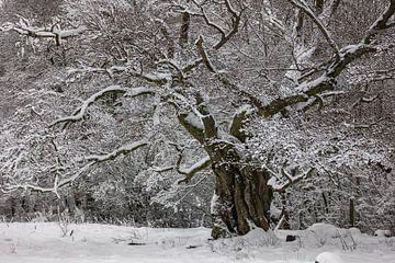 Baum Winterträume