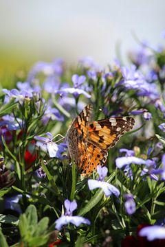 Distelvlinder op lilabloemetjes van Shirley Douwstra